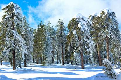 Troodos Winter